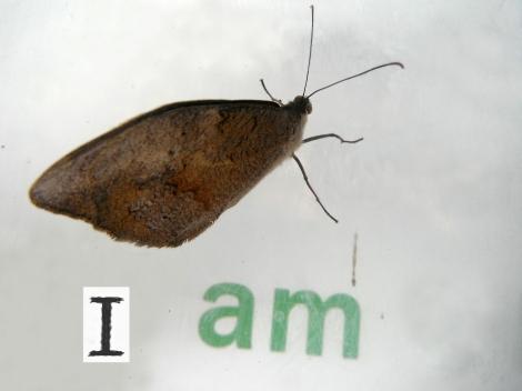 I AM (on 21 12 12)