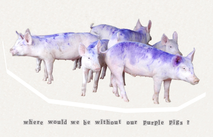 where would we be without our purple pigs
