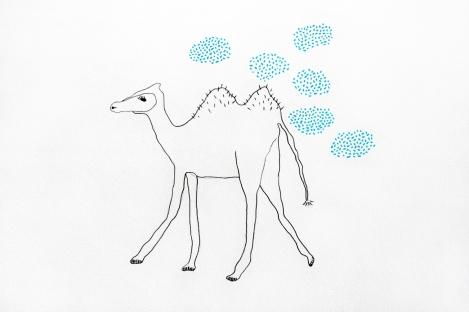 camels dont need rain